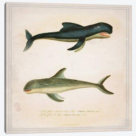 Whale II Canvas Print #NWE59} by Natasha Wescoat Canvas Artwork