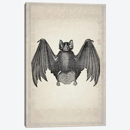 Bats II Canvas Print #NWE5} by Natasha Wescoat Art Print