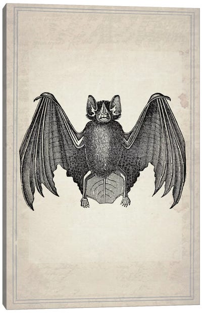 Bats II Canvas Art Print
