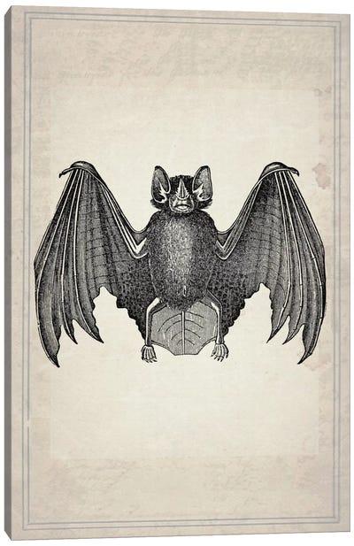 Bats II Canvas Art Print