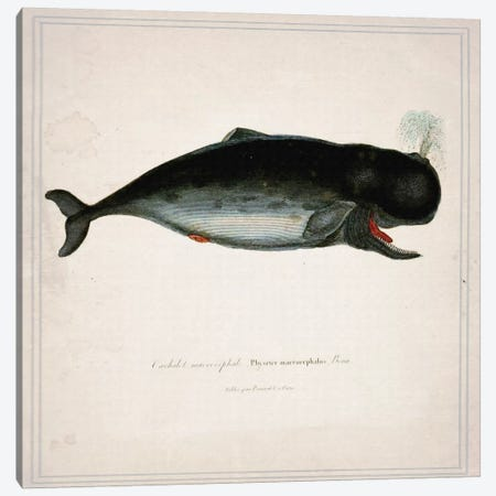 Whale III Canvas Print #NWE60} by Natasha Wescoat Art Print