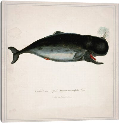 Whale III Canvas Art Print