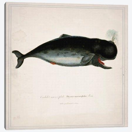 Whale III Canvas Print #NWE60} by Natasha Wescoat Art Print