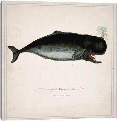 Whale III Canvas Art Print