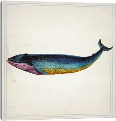 Whale IV Canvas Print #NWE61