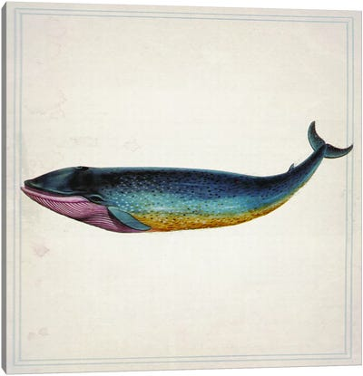 Whale IV Canvas Art Print