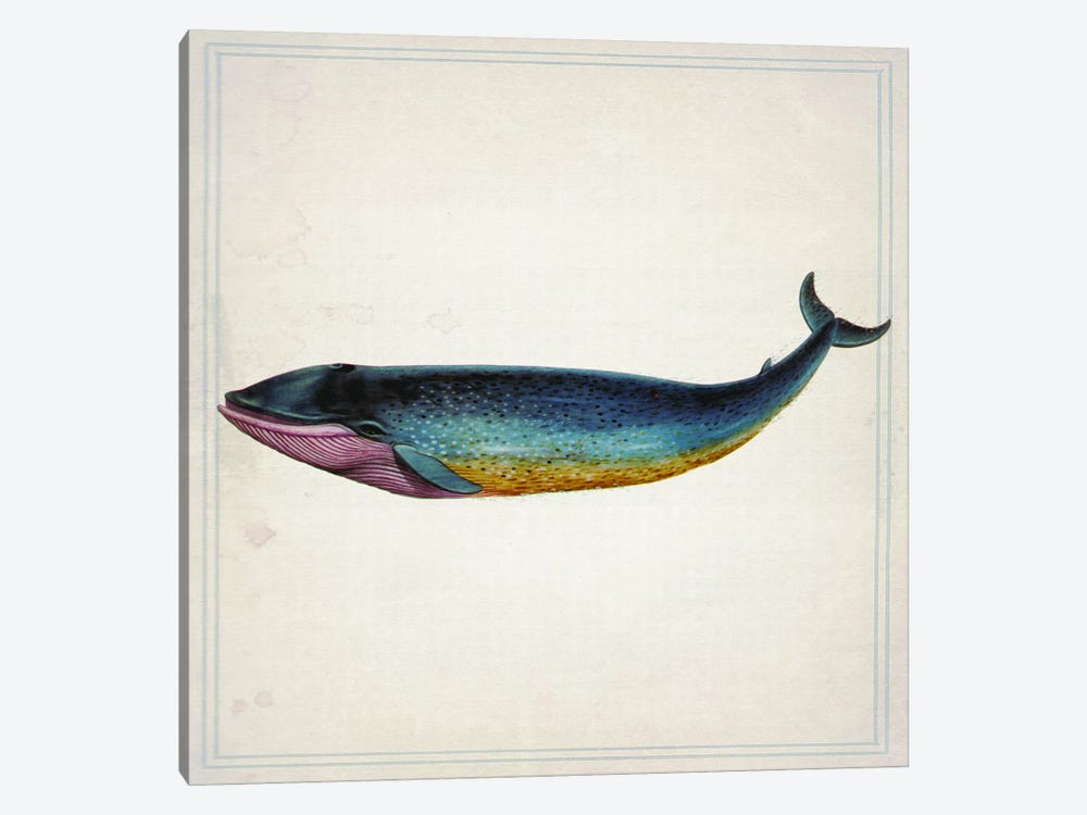 Whale IV 1-piece Canvas Wall Art