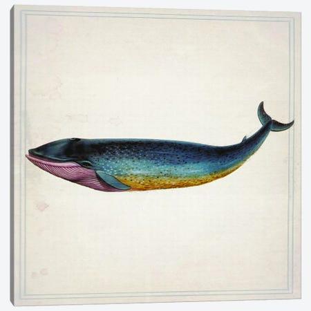 Whale IV Canvas Print #NWE61} by Natasha Wescoat Canvas Art Print