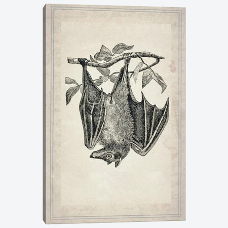 Bats IV Canvas Print #NWE6} by Natasha Wescoat Canvas Art Print