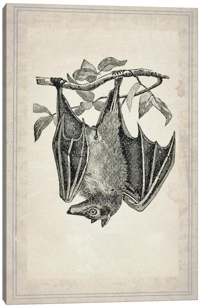 Bats IV Canvas Art Print