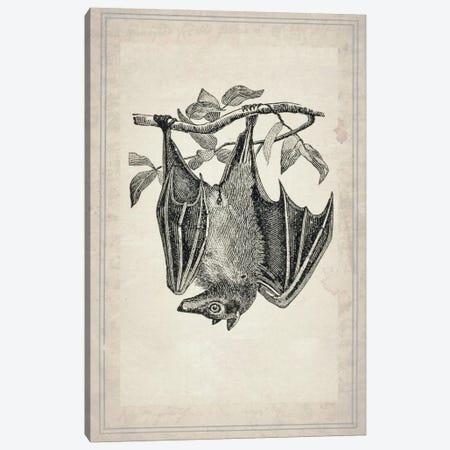 Bats IV Canvas Print #NWE6} by Natasha Wescoat Canvas Art Print