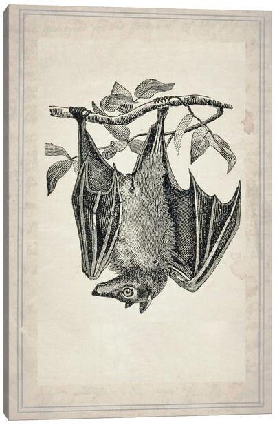 Bats IV Canvas Art Print