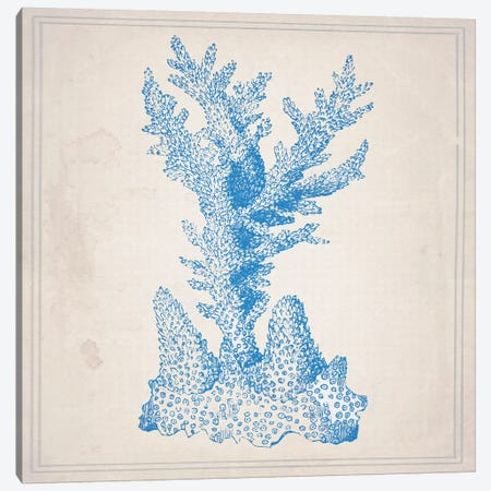 Blue Coral I Canvas Print #NWE8} by Natasha Westcoat Canvas Wall Art