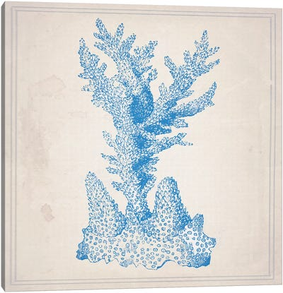 Blue Coral I Canvas Art Print