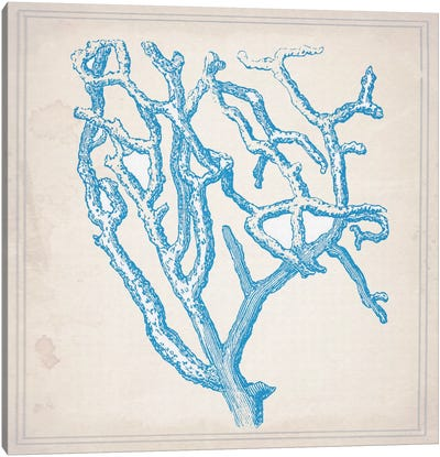 Blue Coral II Canvas Print #NWE9