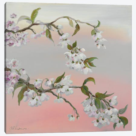 Falling Blossom Canvas Print #NWM131} by Nel Whatmore Canvas Art