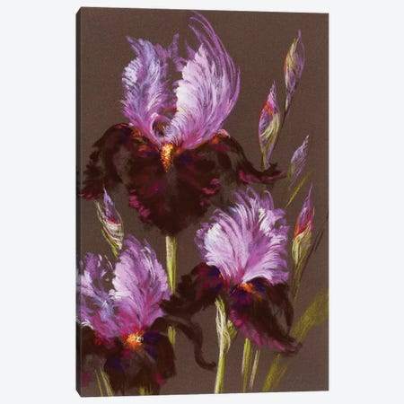 Iris Moonlight Canvas Print #NWM37} by Nel Whatmore Canvas Art Print
