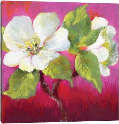 Apple Blossom II Canvas Art Print