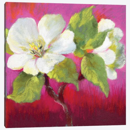 Apple Blossom II Canvas Print #NWM4} by Nel Whatmore Art Print
