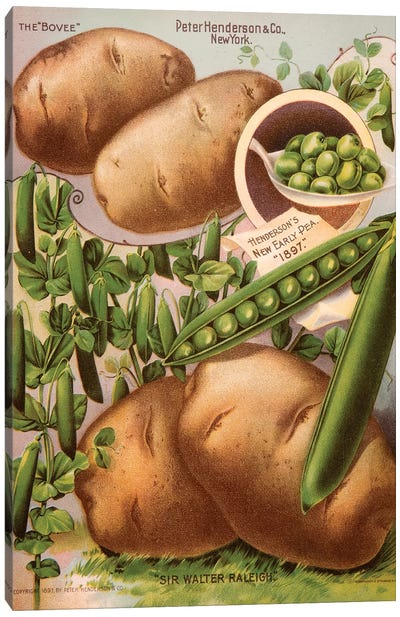 Henderson's Seed Catalogue Series: Peas & Potatoes, 1897 Canvas Print #NYB12