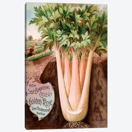 Self-Blanching Golden Rose Celery Canvas Print #NYB14} by New York Botanical Garden Canvas Print