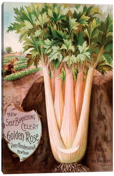 Self-Blanching Golden Rose Celery Canvas Art Print