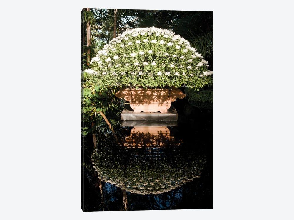 Japanese Chrysanthemums by New York Botanical Garden Portfolio 1-piece Canvas Print