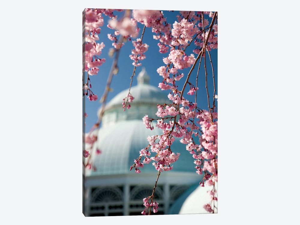 Pink Weeping Cherry Blossoms by New York Botanical Garden 1-piece Canvas Art Print