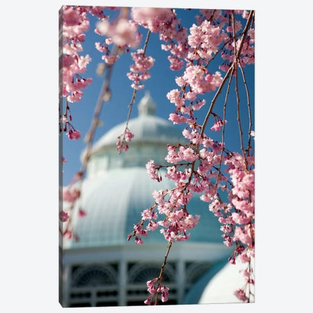Pink Weeping Cherry Blossoms Canvas Print #NYB20} by New York Botanical Garden Portfolio Canvas Print