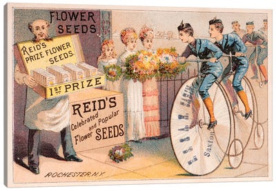 Reid's Prize Flower Seeds Advertisement Canvas Print #NYB21