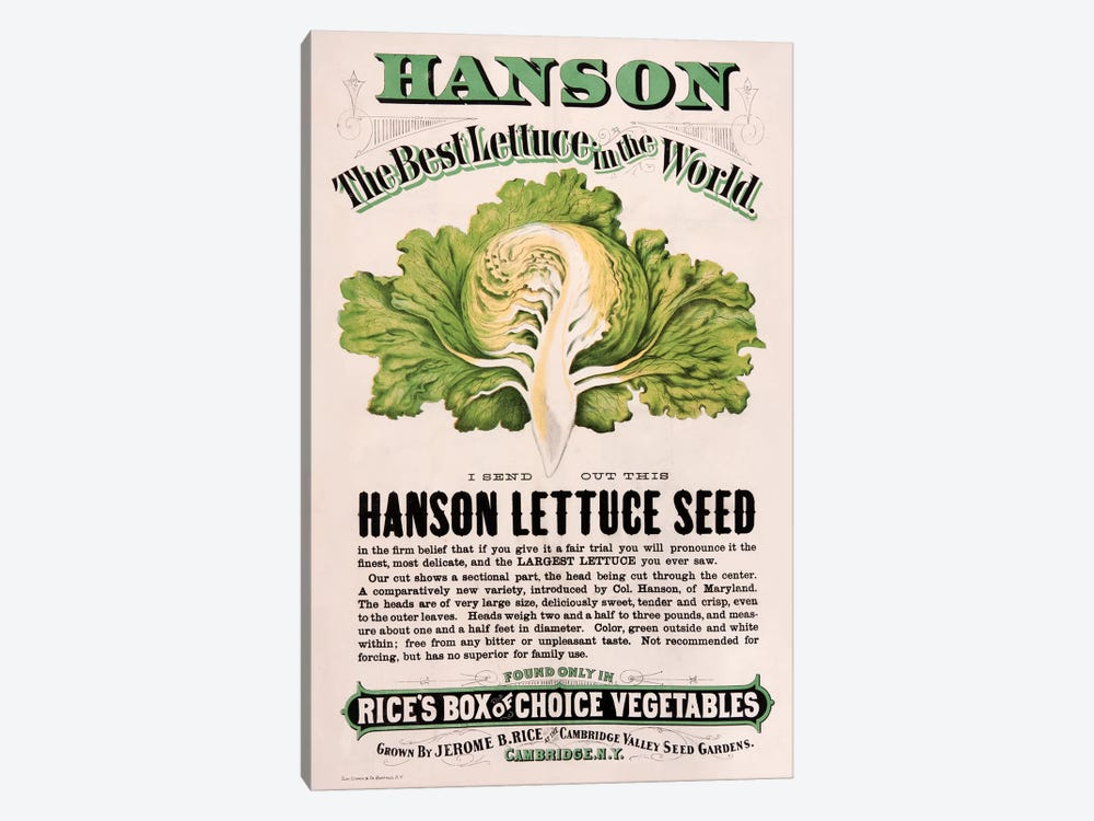 Rice's Hanson Lettuce Seed Advertisement by New York Botanical Garden 1-piece Canvas Art Print