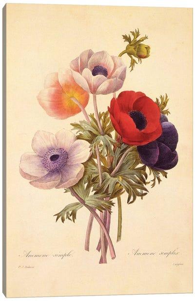 Anemone Simplex Canvas Art Print