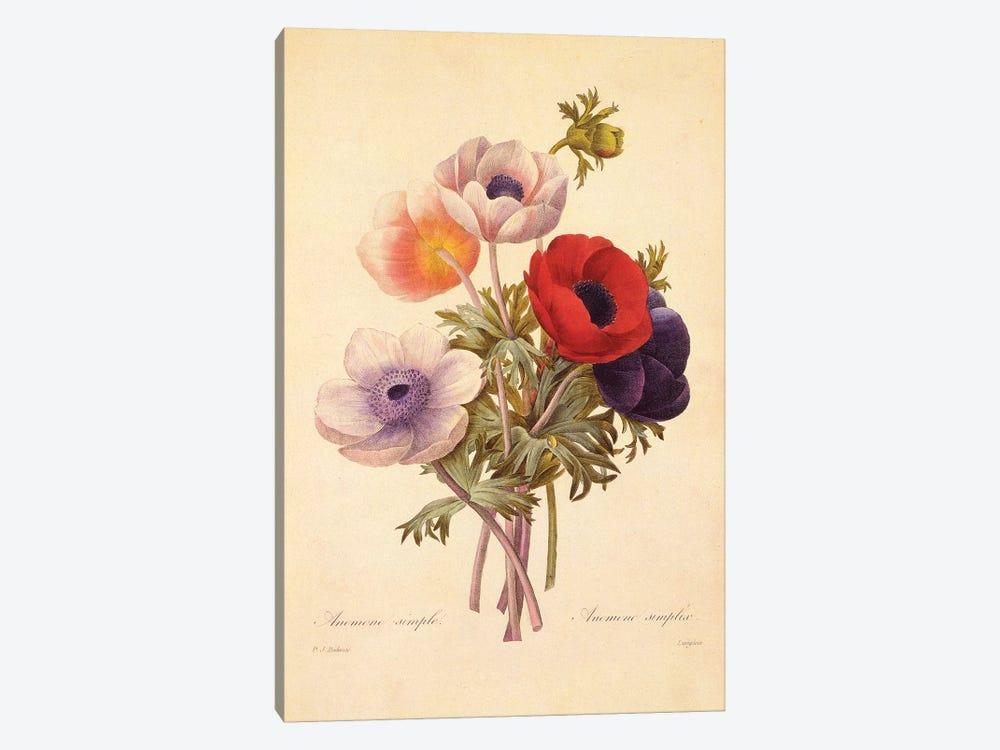 Anemone Simplex by New York Botanical Garden Portfolio 1-piece Canvas Artwork