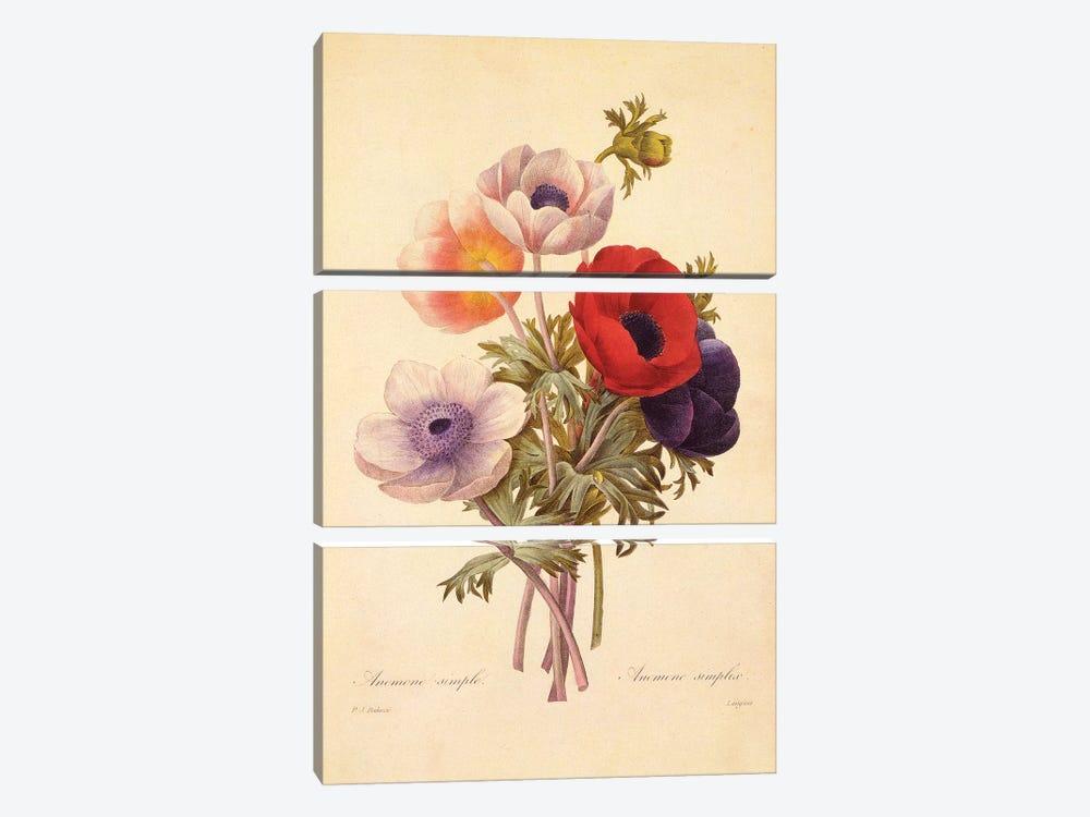 Anemone Simplex by New York Botanical Garden Portfolio 3-piece Canvas Art