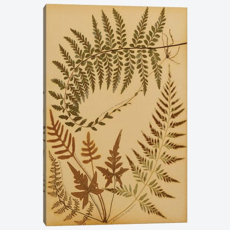 Delicate Branches Canvas Print #NYB25} by New York Botanical Garden Canvas Artwork
