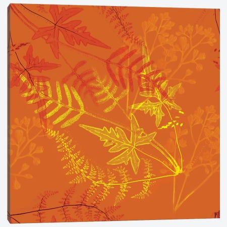 Ferns Canvas Print #NYB26} by New York Botanical Garden Portfolio Canvas Artwork