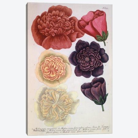 Flowers On Pink Background Canvas Print #NYB31} by New York Botanical Garden Portfolio Canvas Wall Art