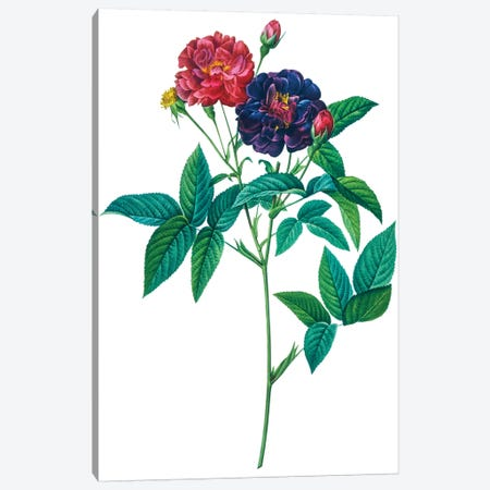 Roses 3-Piece Canvas #NYB44} by New York Botanical Garden Portfolio Canvas Art