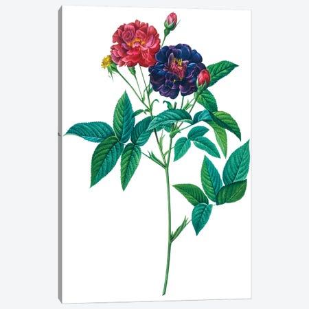 Roses Canvas Print #NYB44} by New York Botanical Garden Portfolio Canvas Art