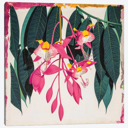 Amherstia Nobilis Bride Of Burma Canvas Print #NYB46} by New York Botanical Garden Canvas Art