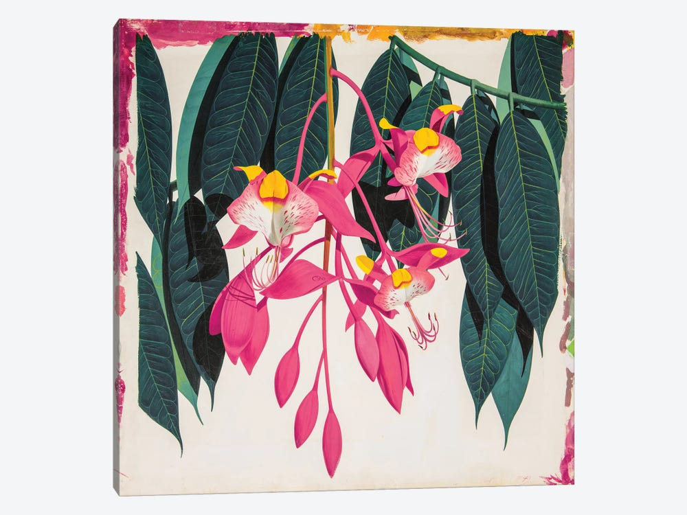 Amherstia Nobilis Bride Of Burma by New York Botanical Garden 1-piece Art Print