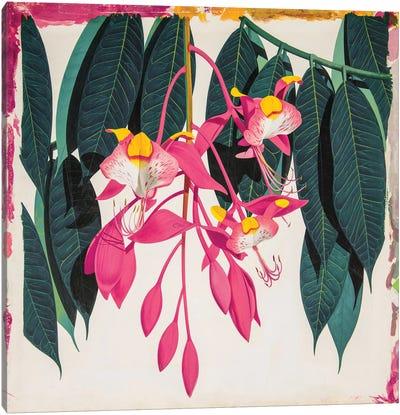 Amherstia Nobilis Bride Of Burma Canvas Art Print