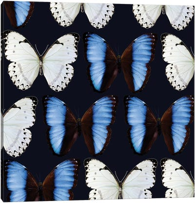 Butterfly Study Canvas Art Print