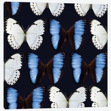 Butterfly Study Canvas Print #NYB48} by New York Botanical Garden Portfolio Canvas Art Print