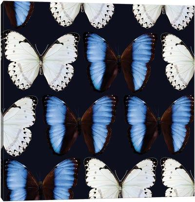 Butterfly Study Canvas Art Print