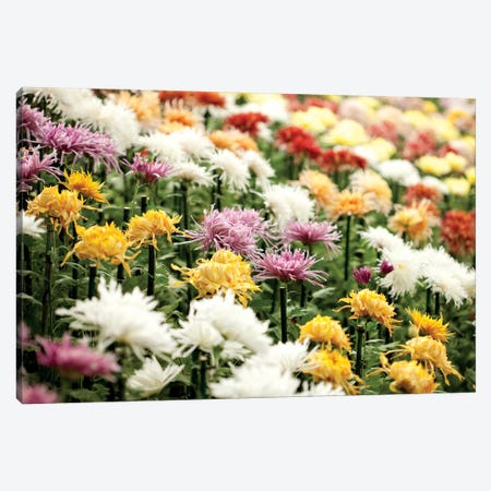 Asteraceae I Canvas Print #NYB4} by New York Botanical Garden Canvas Artwork