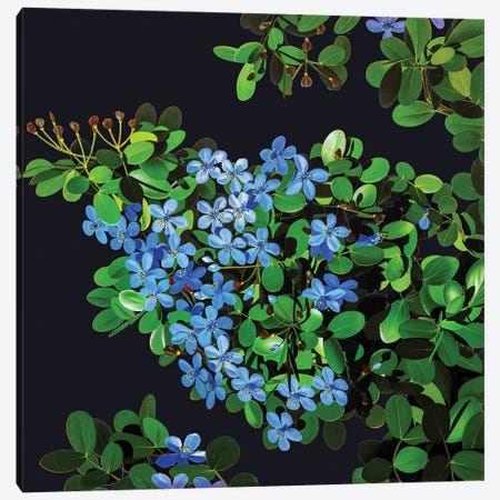 Guaiacum Officinale Lignum Vitae Canvas Print #NYB50} by New York Botanical Garden Portfolio Canvas Art