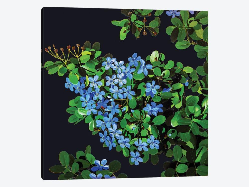 Guaiacum Officinale Lignum Vitae by New York Botanical Garden Portfolio 1-piece Canvas Artwork