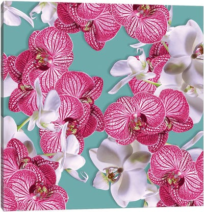 Photographic Orchids Canvas Art Print