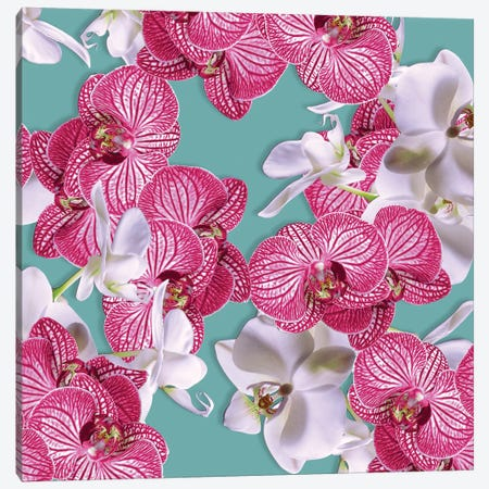 Photographic Orchids Canvas Print #NYB51} by New York Botanical Garden Portfolio Canvas Wall Art